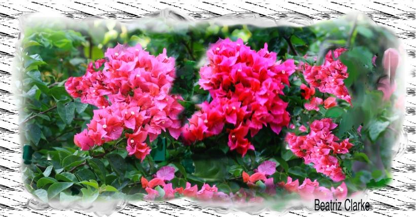 Beatriz.garden